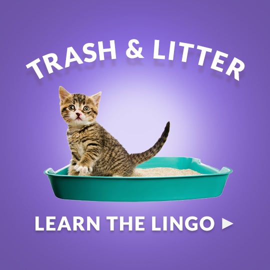 Cat Litter Disposal Amp A Fresh Smelling Trash Can Glad