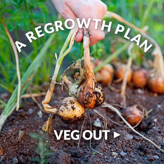 10 Vegetables You Re Grow From Kitchen Scraps: Regrow Vegetables And Herbs From Scraps