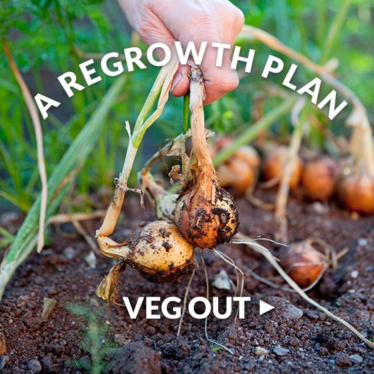 Regrow Veggies From Kitchen Scraps: Regrow Vegetables And Herbs From Scraps