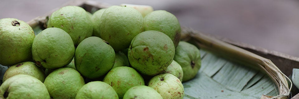 How to Store Guavas: Read Tips for Fresh Guavas | Glad®