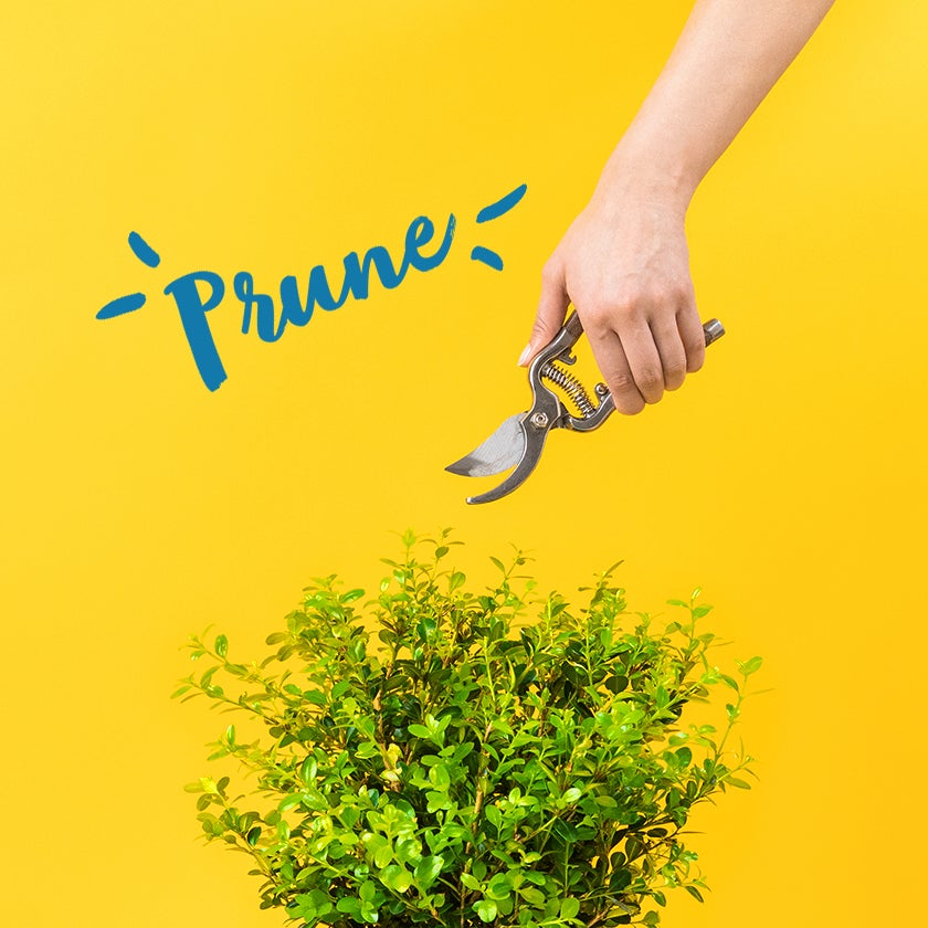 When to Prune your plants
